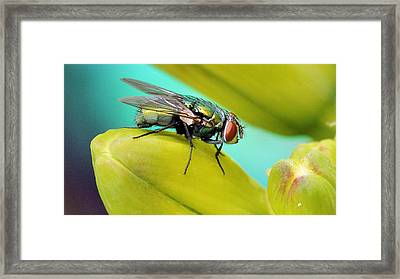 Framed Print featuring the photograph Fly By by Cathy Donohoue