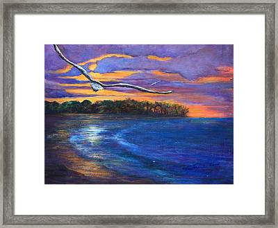 Fly By Night II Framed Print by Susi LaForsch