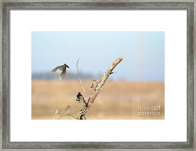 Fly Bye Framed Print by Laurianna Taylor