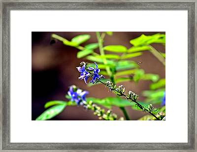 Fly Flower Framed Print by Mark Russell