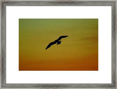 Fly High Free Bird Framed Print by Frozen in Time Fine Art Photography