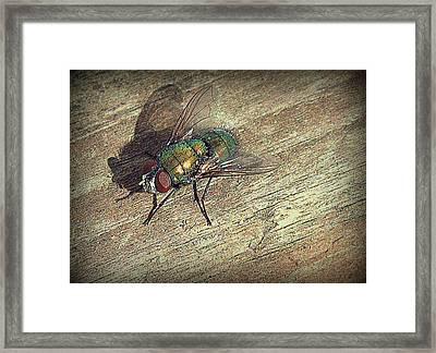Fly Impressions Framed Print