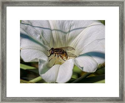 Framed Print featuring the photograph Fly In White Flower by Leif Sohlman
