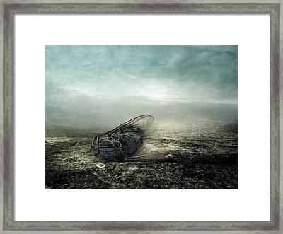 Fly Framed Print by Johan Lilja