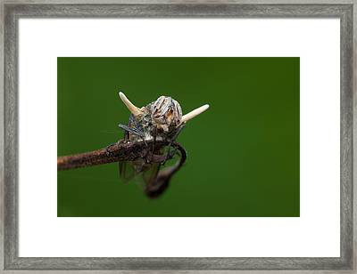 Fly Killed By A Parasitic Fungus Framed Print by Melvyn Yeo