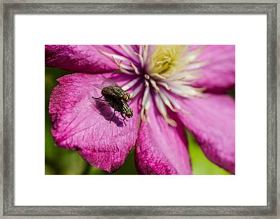 Fly Love Framed Print by Andreas Berthold