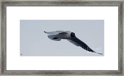 Fly Framed Print by Marco Affini