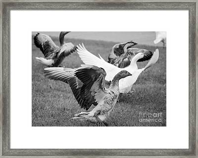 Fly Framed Print by Mister Image