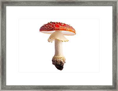 Fly Mushroom Framed Print