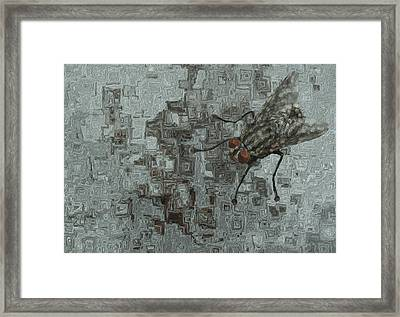 Fly On The Wall Framed Print by Jack Zulli