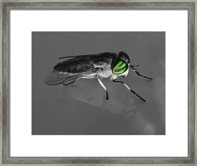 Fly On The Wall Framed Print by Frozen in Time Fine Art Photography