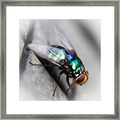 Fly On Tyre Framed Print