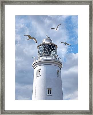 Fly Past - Seagulls Round Southwold Lighthouse Framed Print
