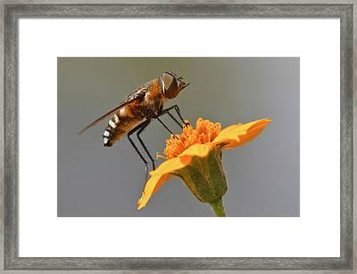 Fly Resting On Wildflower, Edinburg Framed Print by Larry Ditto