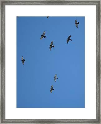 Fly Through The Sky's Ceiling Framed Print