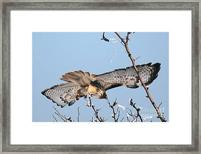 Flyby Framed Print by Bob Hislop