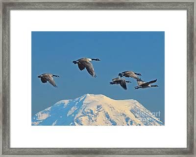Flyby Framed Print by Jack Moskovita