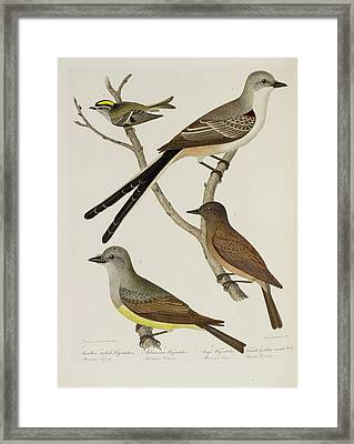 Flycatcher And Wren Framed Print