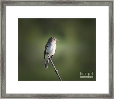 Framed Print featuring the photograph Flycatcher In Meditation by Anita Oakley