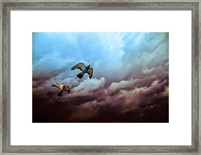 Flying Before The Storm Framed Print