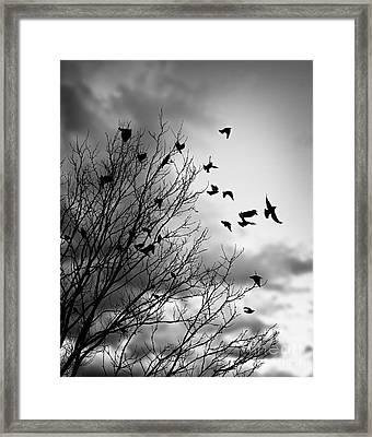 Flying Birds Framed Print by Elena Elisseeva