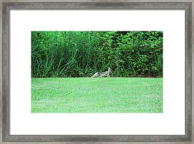 Framed Print featuring the photograph Flying Bunny by Lorna Rogers Photography