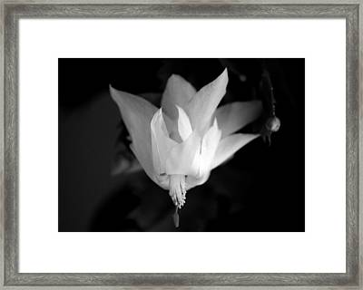 Flying Cactus Framed Print by Silke Brubaker