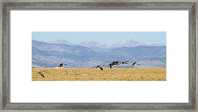 Flying Canadian Geese Rocky Mountains Panorama 2 Framed Print