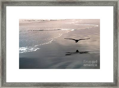 Flying Close To The Ground Framed Print by Gregory Dyer
