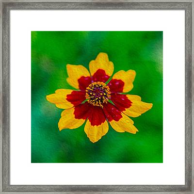 Flying Colors Framed Print by Omaste Witkowski