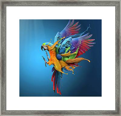 Flying Colours Framed Print