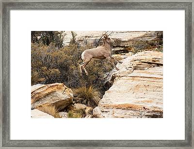 Flying Ewe Framed Print by James Marvin Phelps