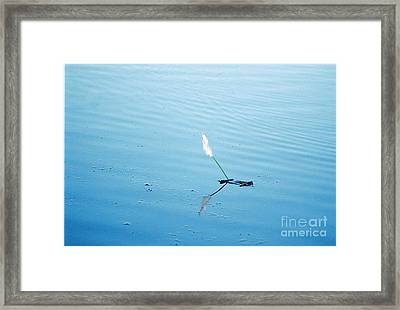 Flying Feather Boat Framed Print