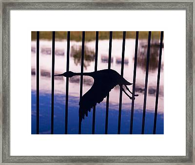 Flying Fence Framed Print