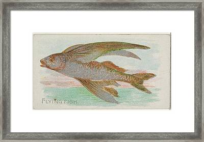 Flying Fish, From The Fish Framed Print