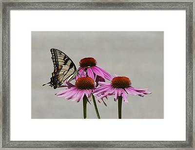 Flying Flower Framed Print