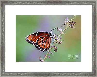 Flying Flower Framed Print by Sabrina L Ryan