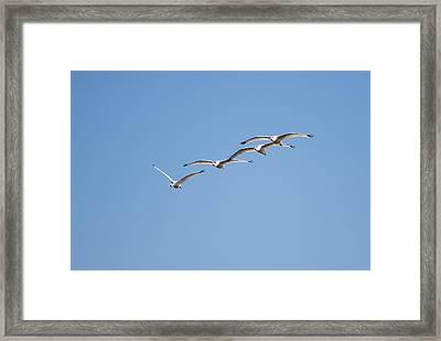 Framed Print featuring the photograph Flying Formation by John M Bailey
