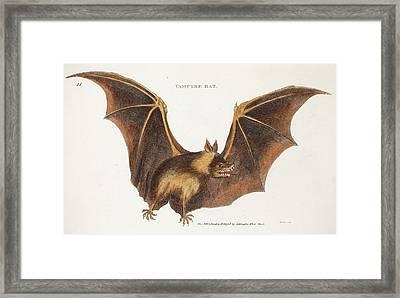 Flying Fox Fruit Bat Framed Print by Paul D Stewart