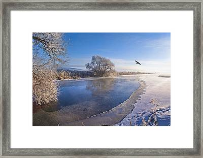 Flying Free On A Winter's Day Framed Print