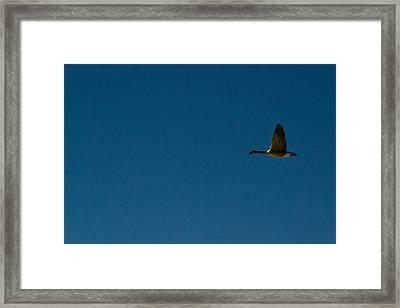 Flying Goose Framed Print
