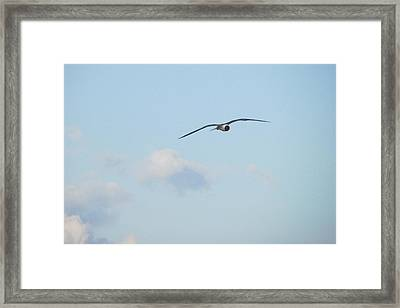 Flying High Framed Print by Cheryl Smith