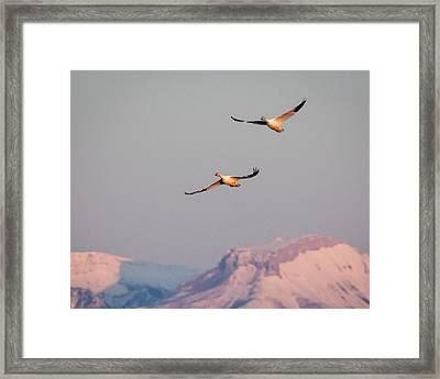 Framed Print featuring the photograph Flying High by Jack Bell