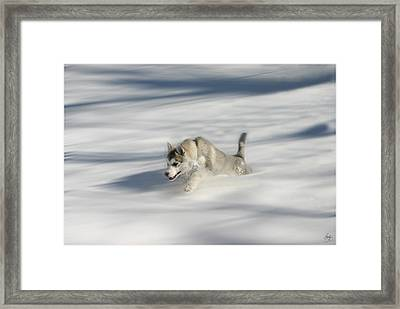 Flying In A Husky Dream Framed Print