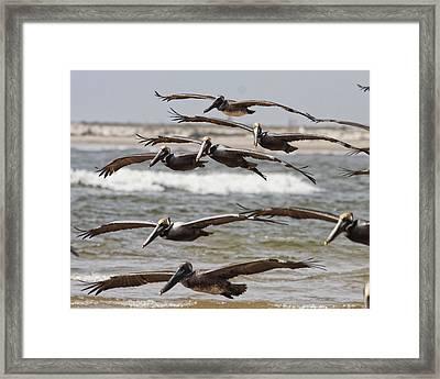 Flying In Framed Print