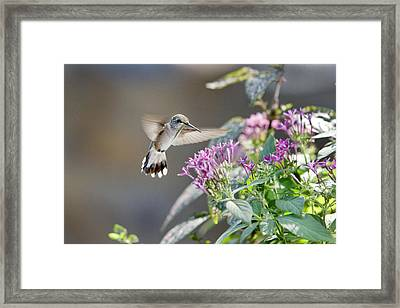 Framed Print featuring the photograph Flying In For A Morning Meal by Robert Camp