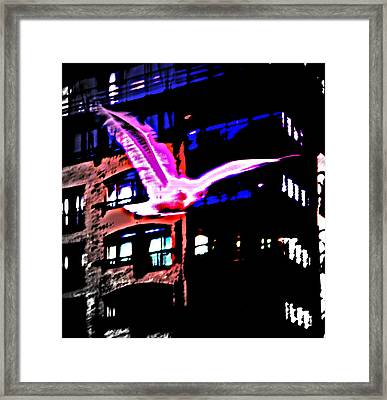 Seagull Flying Alone In The Big City At Night  Framed Print