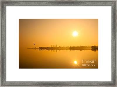 Flying In The Golden Light Framed Print by Michael Hrysko