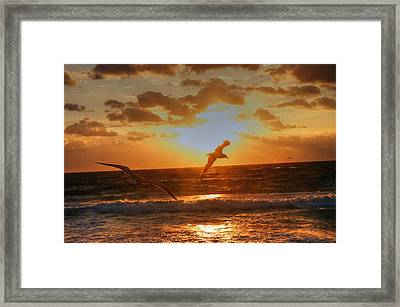 Framed Print featuring the photograph Flying In The Sun by Dennis Baswell