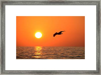 Flying Into The Sun Framed Print by David Lee Thompson